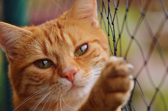 kočka a plot