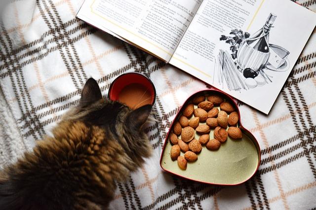 kočka a jídlo