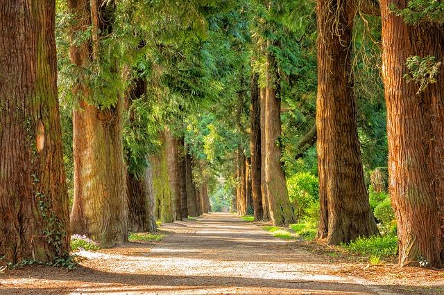stromy u cesty.jpg