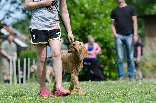 Jak naučit psa základním povelům?